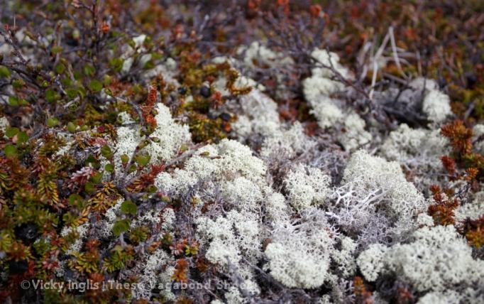 tundra_1_small