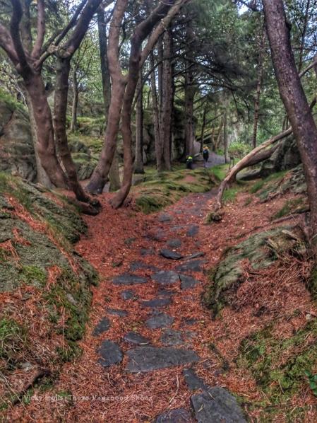 skudenes_woods_1_small