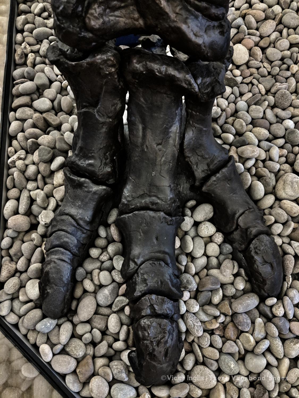 iguanodon_foot_1_small
