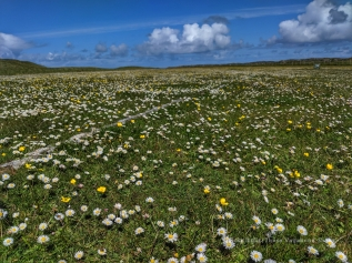 coll_machair_3_small