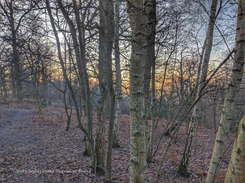 frosty_birch_1_small