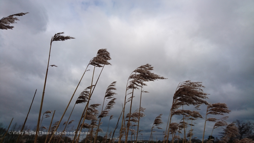 reedbed_1_small