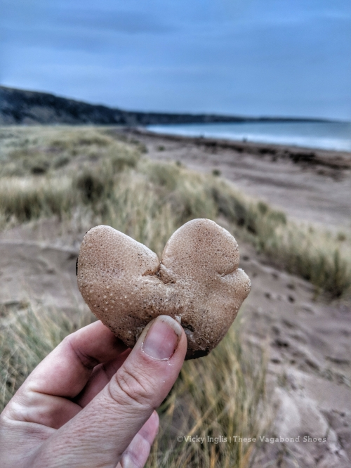 st_cyrus_sea_heart_small