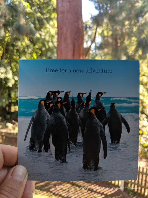 new_adventure_sm