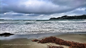 lyall_bay_nz_1.1