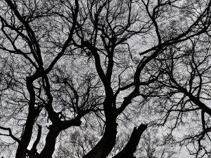 winter_canopy_small