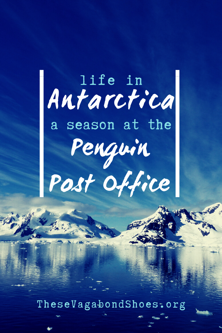 pin_life_in_antarctica_1