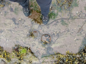 Dipping my toes in a convenient rockpool.