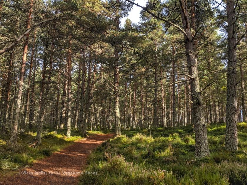 abernethy_forest_4_sm