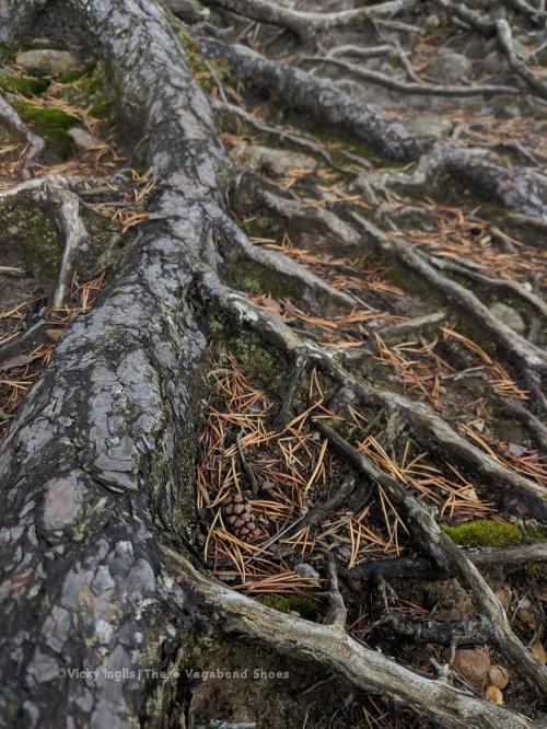 abernethy_forest_5_sm